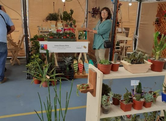 Cactus y suculentas ornamentales y medicinales