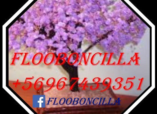 Flooboncilla